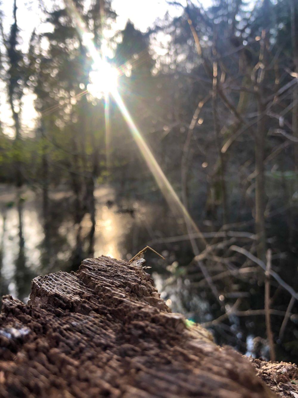 Sonnenstrahlen über Holzstamm im Wald