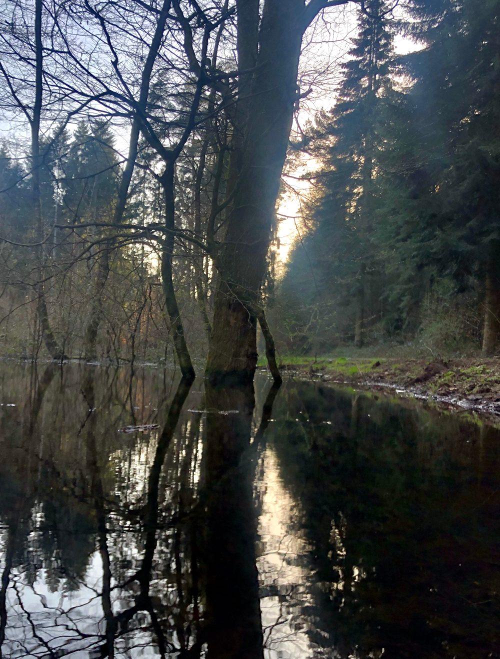 Bäume spiegeln sich in einem Gewässer im Wald