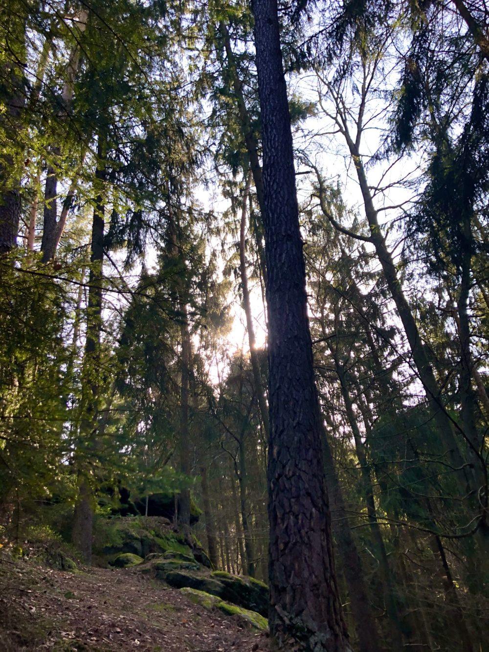 Sonne strahlt zwischen den Ästen der Bäume hervor