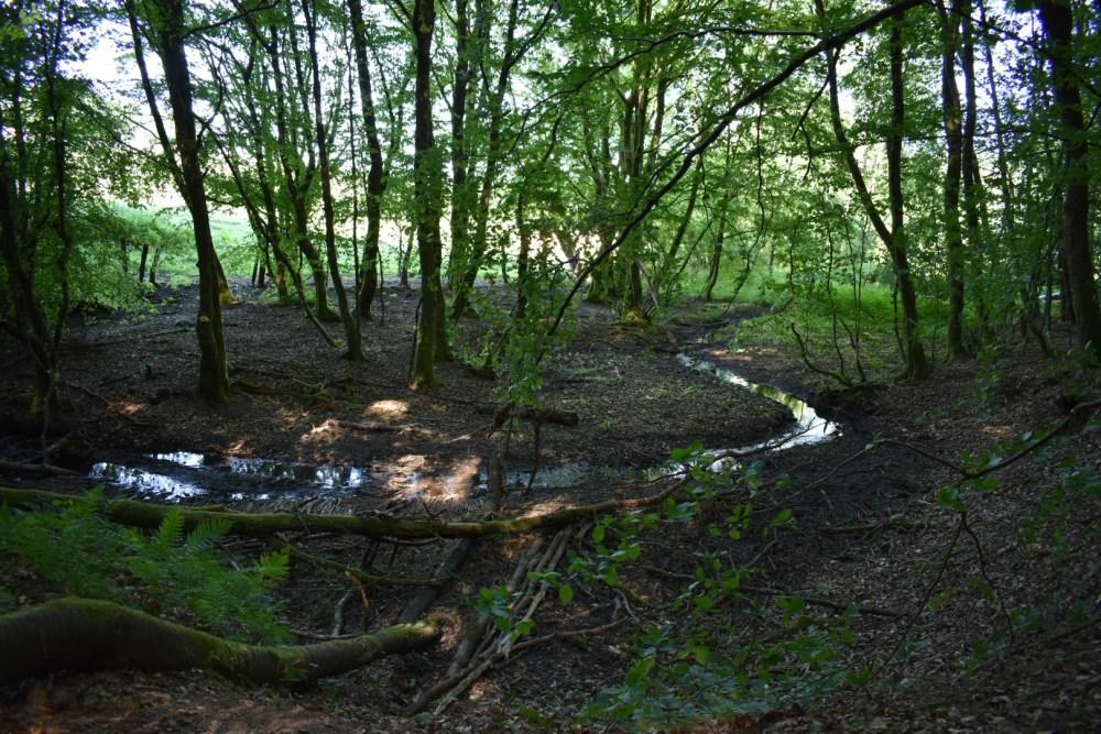Fluss der sich durch den Wald schlängelt