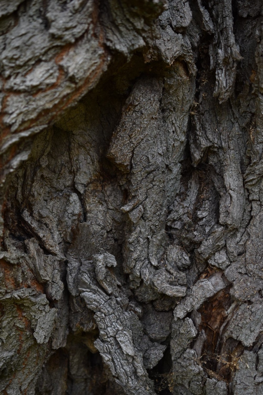 Strukturen der Baumrinde