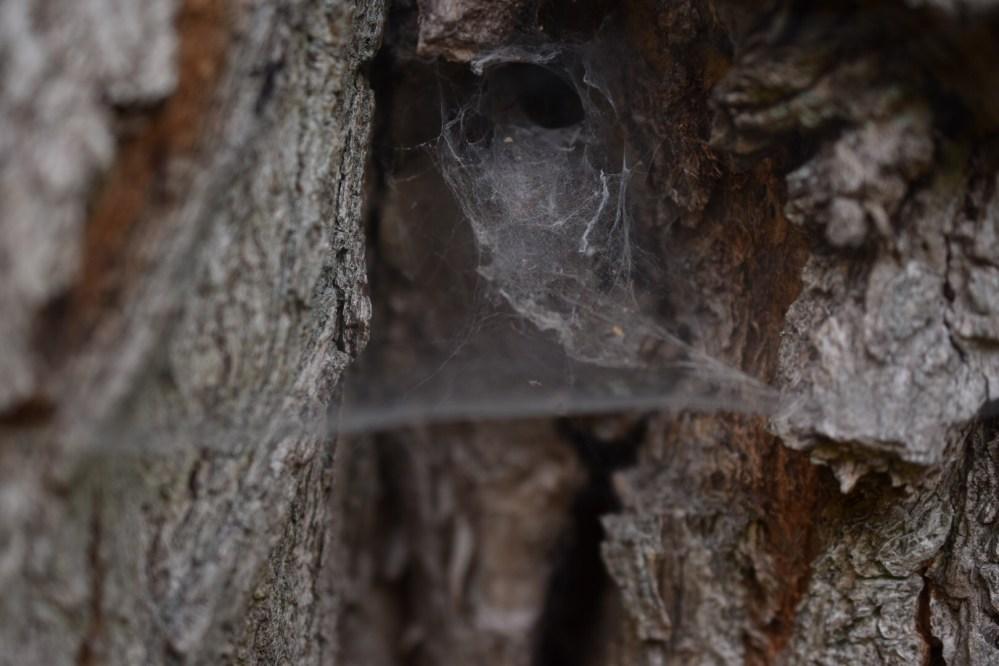 Spinnennetz am Baum, in dem man einen Totenkopf erkennen kann