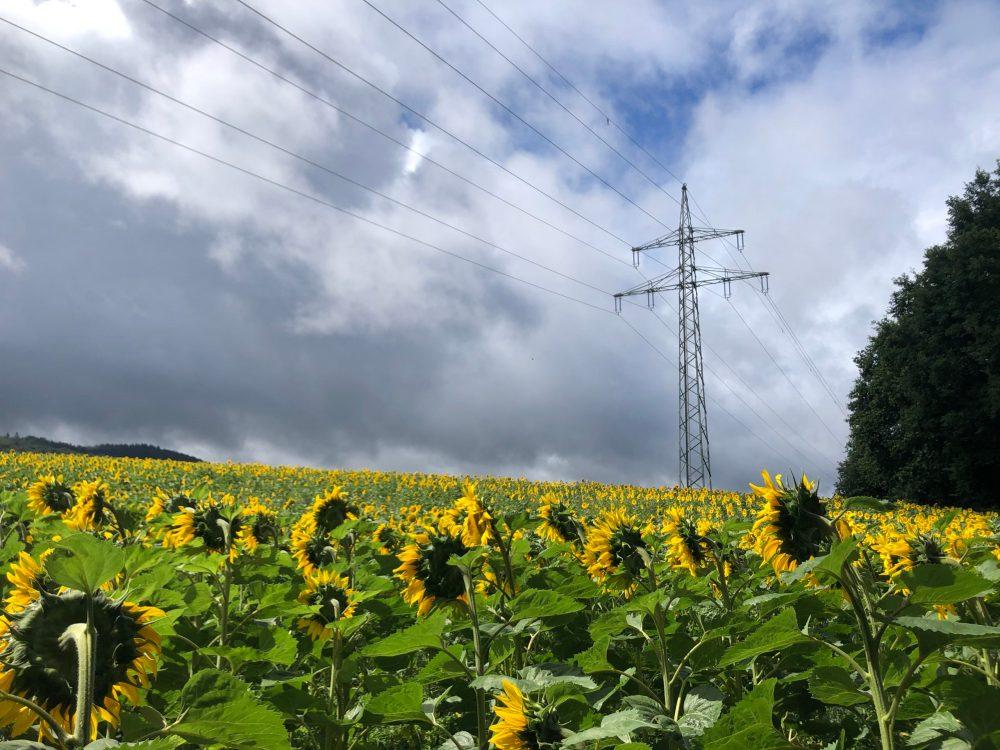 Strommaste auf dem Sonnenblumenfeld