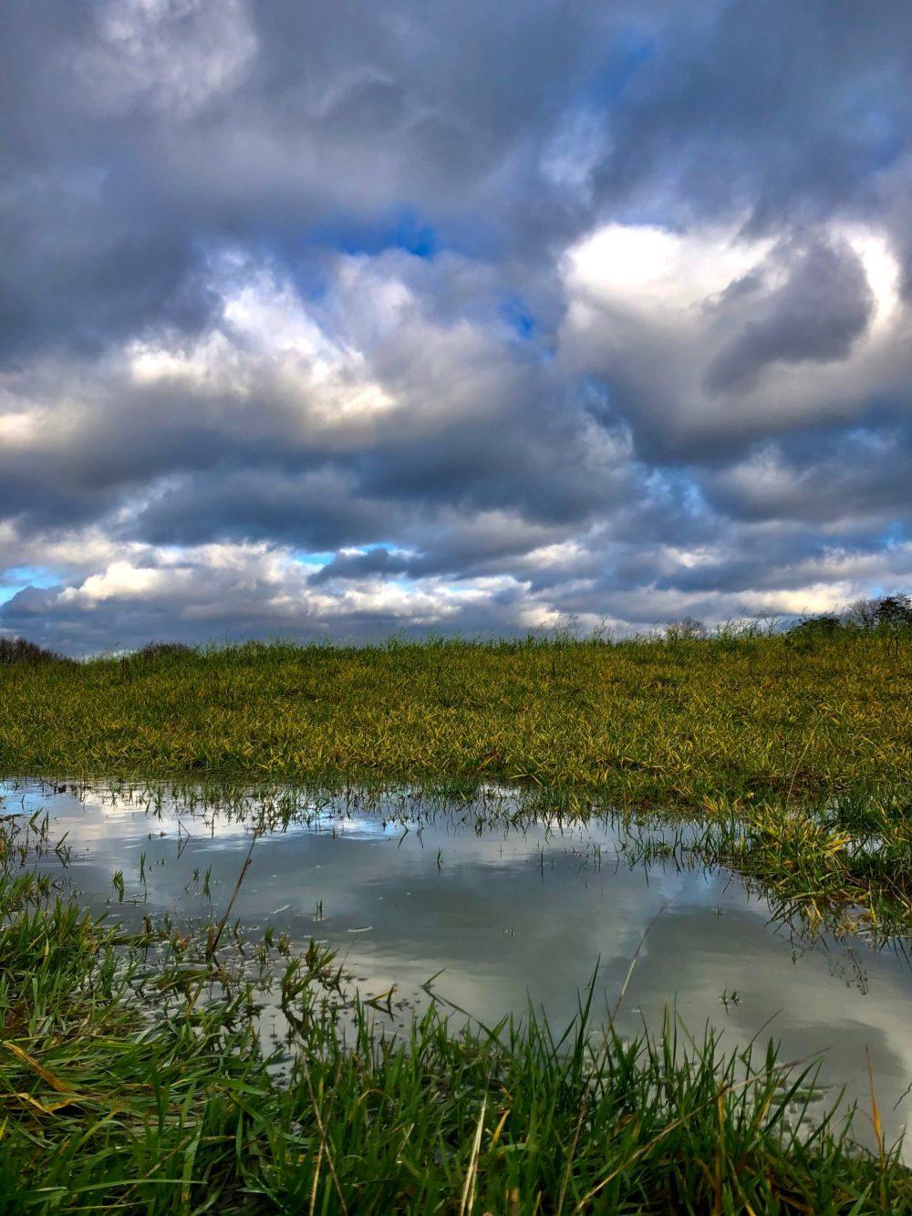 Wolken spiegeln sich auf einer Pfütze in der Wiese