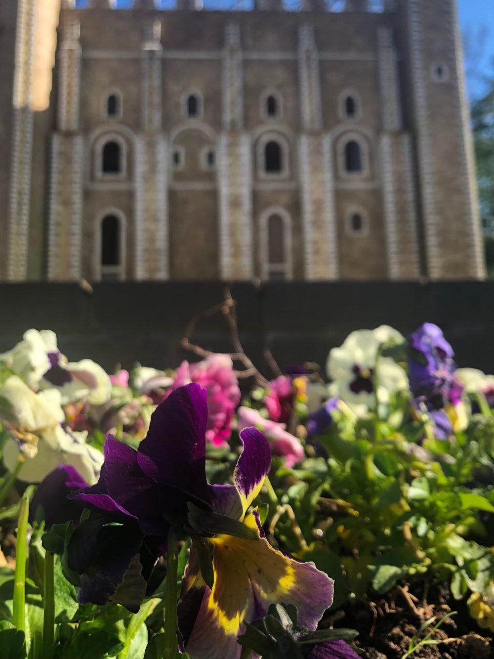 Bunte Stiefmütterchen vor dem Tower of London