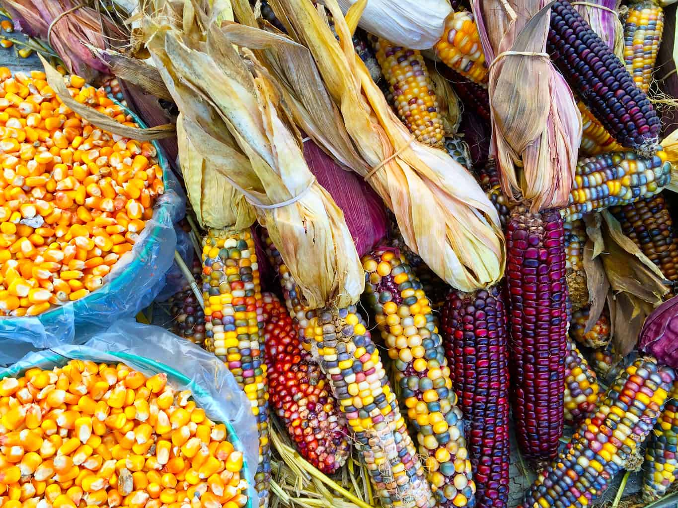 Native American Foods Throughout The United States