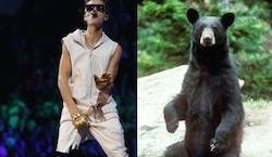 Bear attack foiled by Justin Bieber's music: A story too good to check
