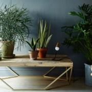 5 kućni biljaka koje se lahko održavaju