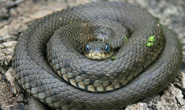 Коли і чому змії кусають