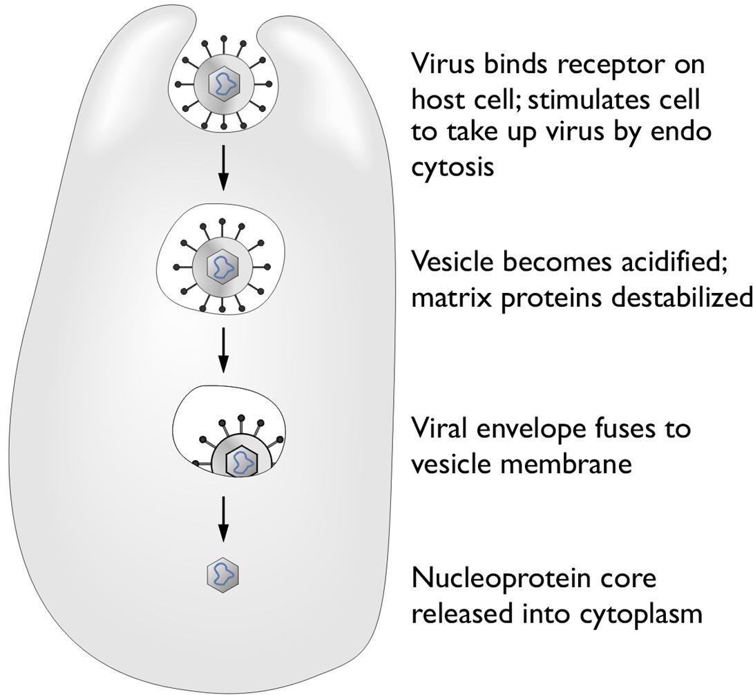 Influenza A Viruses Pathogen Profile Dictionary