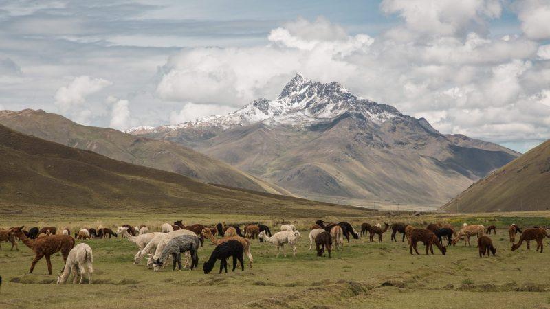 Foto: Maria Paz Gonzales / PNUD Perú - PPD