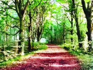 a woodland path illustrating a post about writing prompts