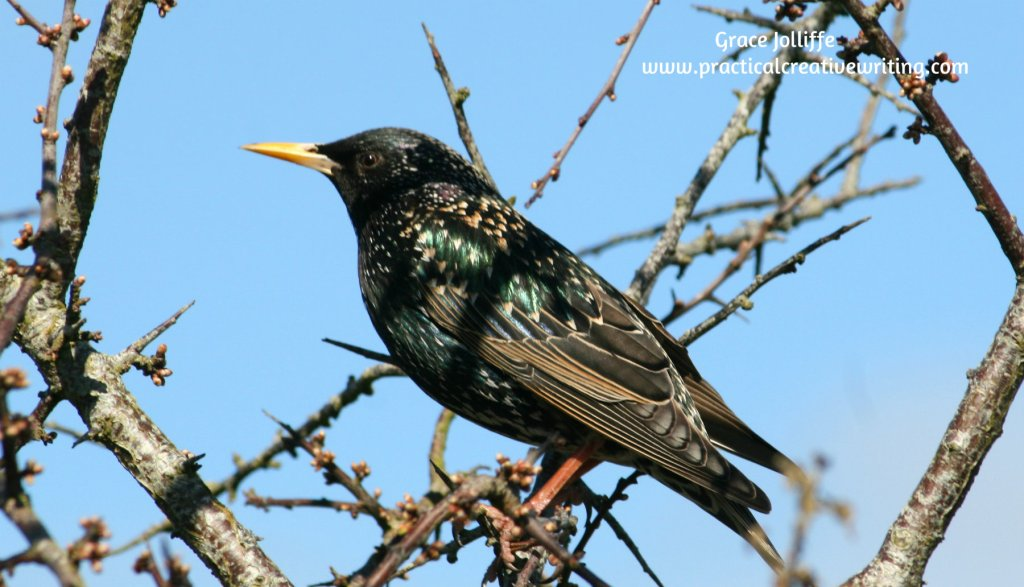 blackbird on a branch illustrating an article about seasonal affective disorder and writers
