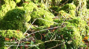 mossy- tree stumps illustrating article about where story ideas come from