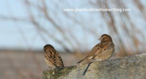 two little birds chatting on a fence illustrating an article about creative writing activities