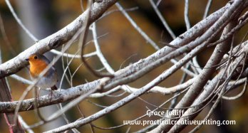 robin in a tangle of branches illustrating an article on creative writers and Christmas.
