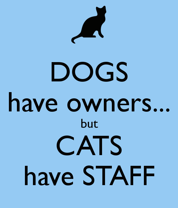 dogs-have-owners-but-cats-have-staff.png