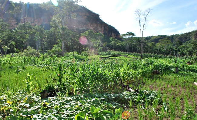 roca plantacao indios terras brasil MT