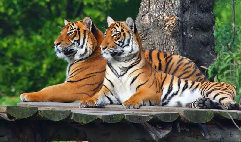 Image result for Prague zoo
