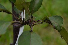 Neubudlo mravcov ani vošiek