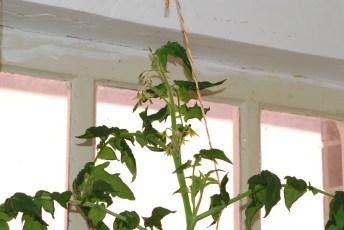 Opora pre rastliny