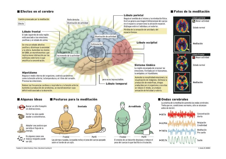 https://i1.wp.com/www.prana.es/uploads/2/5/1/6/25160492/efectos-en-el-cerebro.jpg?resize=950%2C670