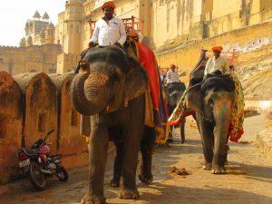 Elefantes em Frente a fortaleza Amber em Jaipur, Índia