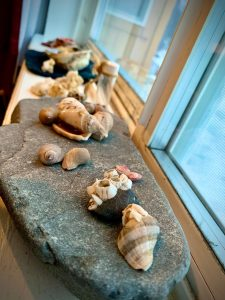 A windowsill lined with shells and stones