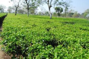 तेलंगाना में वायुसेना का प्रशिक्षण विमान दुर्घटनाग्रस्त, महिला पायलट सुरक्षित