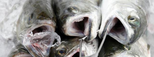 zuchtfische-medikamente