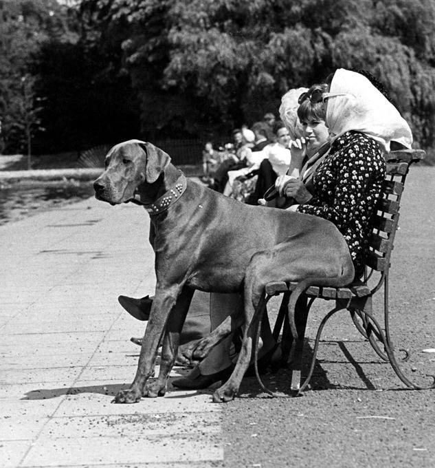 Лучшие ретрофотографии с животными