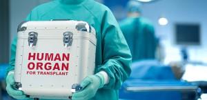 organi-za-transplantacija-640x310