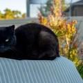 black cat - Stress - gut oder schlecht?