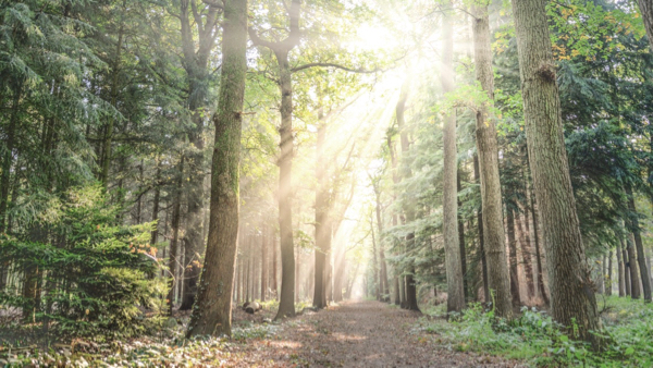 Weg durch den Wald, Beispiel für Gesundheitspsychologie