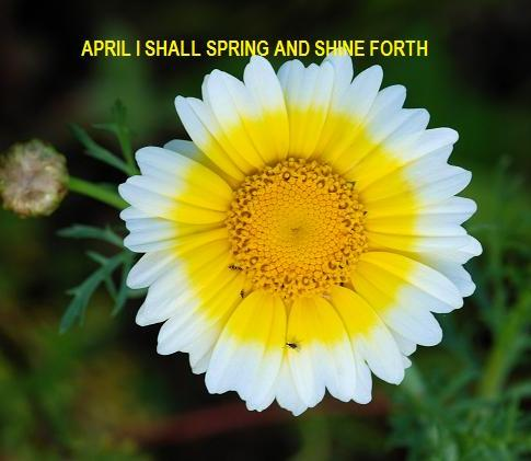 APRIL SHINE FORTH