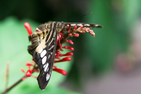 Butterfly Pavilion, Westminster, Colorado