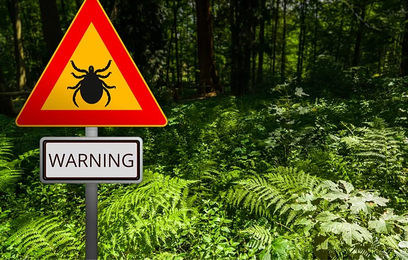 How to protect your dog from ticks with the best methods