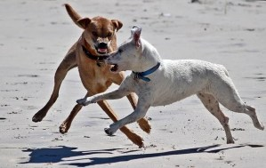 How to protect your dog from another dog