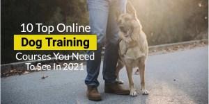 Best online dog courses
