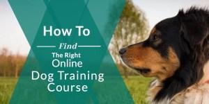The best online dog training