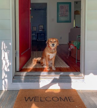 Dog always greets you when you arrive home