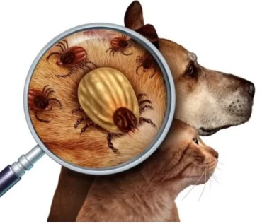 Preventative treatments for dogs to save their lifes