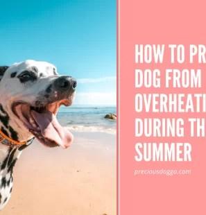dog-overheating