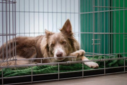 dog crate is a part of puppy house training