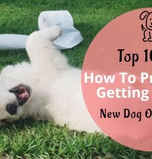 How-To-Prepare-For-Getting-A-Puppy