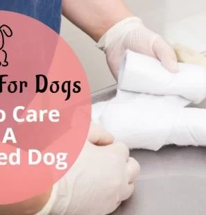 How-To-Care-Of-A-Wounded-Dog