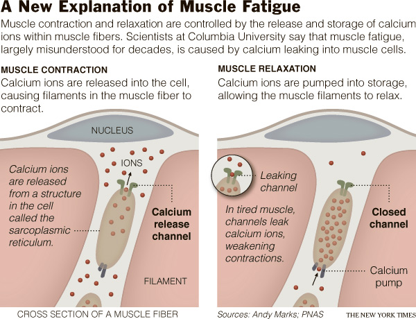 0212 sci subMUSCLE All About Vitamins & Minerals