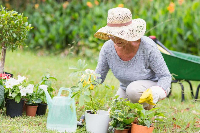 Happy-grandmother-gardening-000069561765_Small