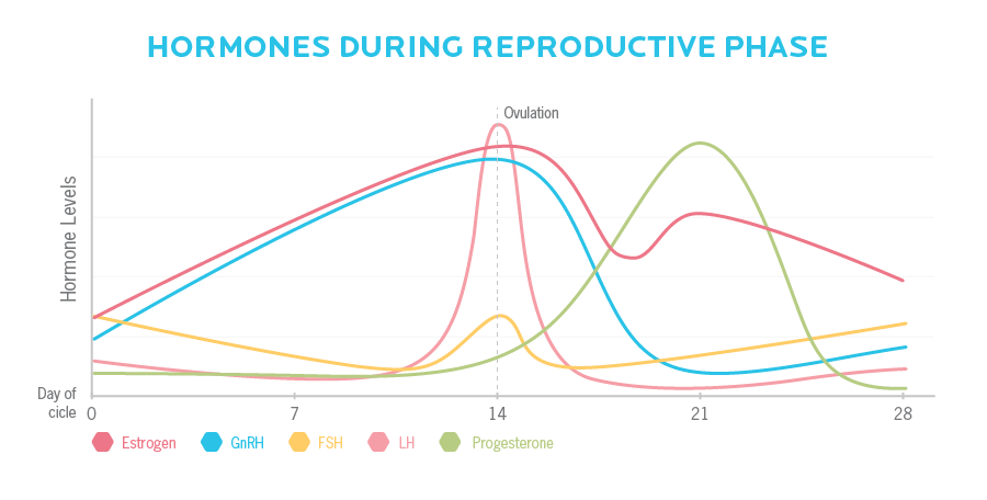 Hormones levels rise and drop at varied points during each monthly menstrual cycle.