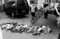 20140713-bw-dog-meat-trade-caguioa-01